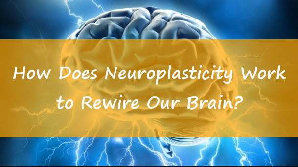 How Does Neuroplasticity Work